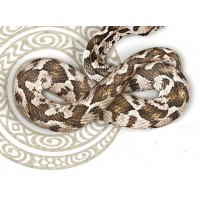 "15105 Околоочен активен гел срещу бръчки ""Snake Factor"", 25 гр."